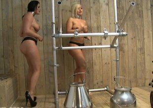 Ball gagged slave sluts fastened to milking machine